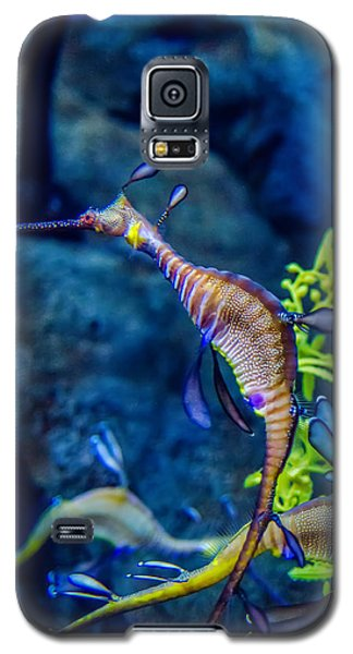 Weedy Seadragon Galaxy S5 Case