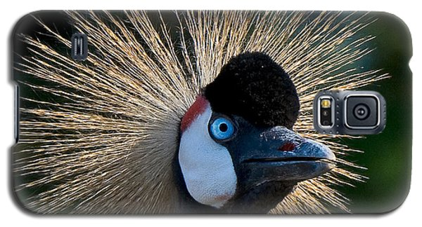 West African Crowned Crane Galaxy S5 Case
