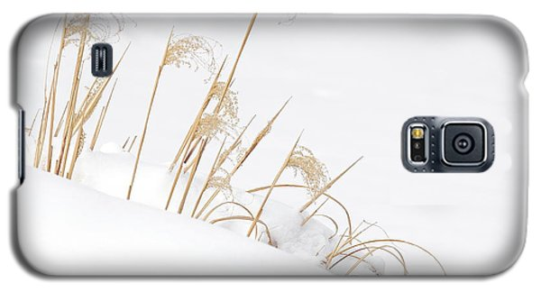 West Falls Winter Grass Galaxy S5 Case by Don Nieman