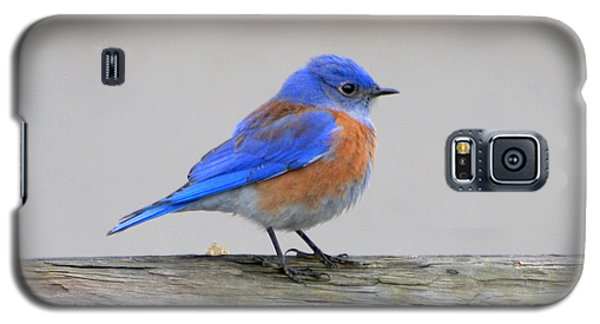 Galaxy S5 Case featuring the photograph Western Bluebird Perching by Bob and Jan Shriner