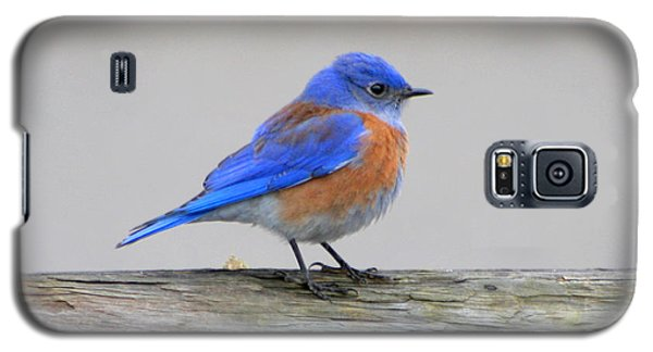 Western Bluebird Perching Galaxy S5 Case