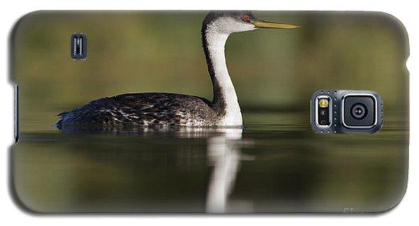 Western Grebe Galaxy S5 Case by Bryan Keil