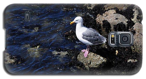Western Gull On Rocks Galaxy S5 Case