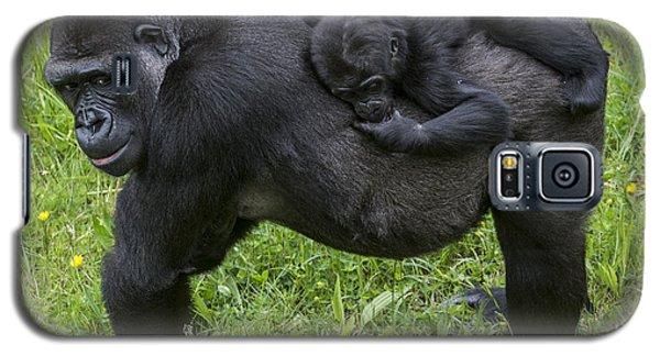 Western Lowland Gorilla 2 Galaxy S5 Case