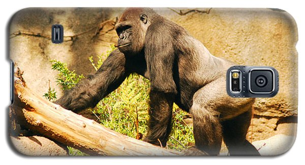 Galaxy S5 Case featuring the photograph Western Lowland Gorilla by James Kirkikis