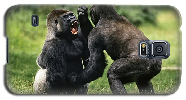Western Lowland Gorilla Males Fighting Galaxy S5 Case by Konrad Wothe