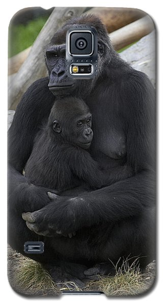 Western Lowland Gorilla Mother And Baby Galaxy S5 Case by San Diego Zoo