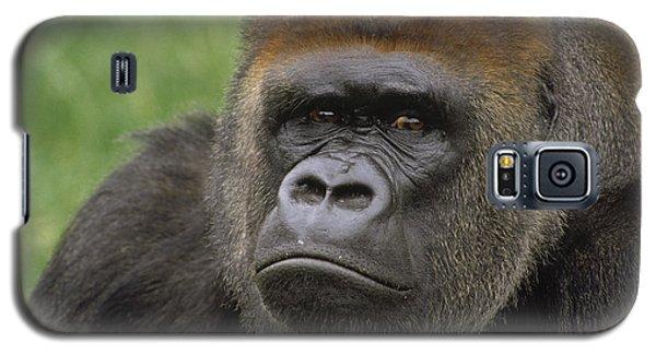 Western Lowland Gorilla Silverback Galaxy S5 Case