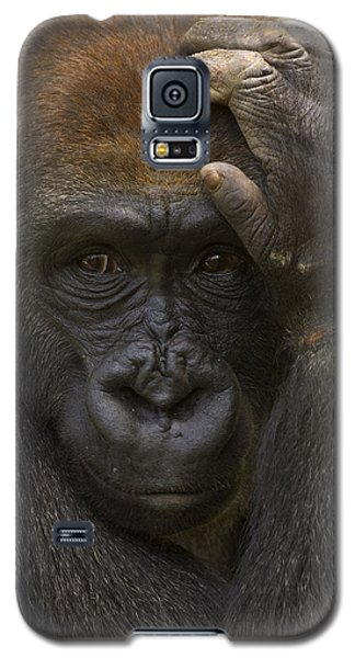Western Lowland Gorilla With Hand Galaxy S5 Case by San Diego Zoo