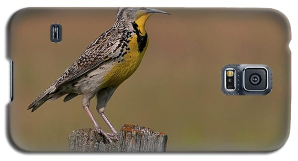 Western Meadowlark.. Galaxy S5 Case
