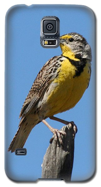 Galaxy S5 Case featuring the photograph Western Meadowlark Perching by Bob and Jan Shriner