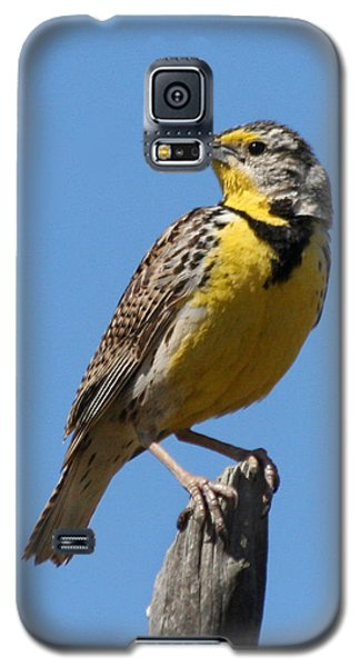 Western Meadowlark Perching Galaxy S5 Case