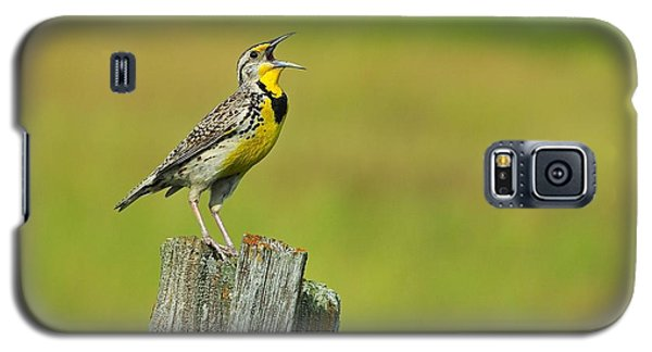 Western Meadowlark Galaxy S5 Case by Tony Beck