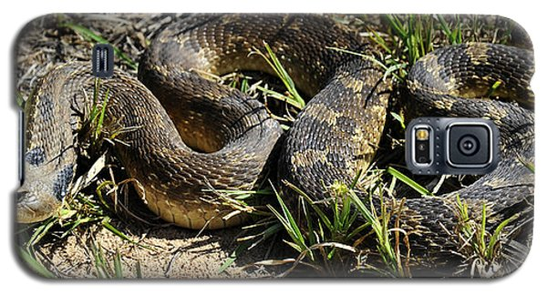 Western Plains Hognose Snake Galaxy S5 Case by Karen Slagle