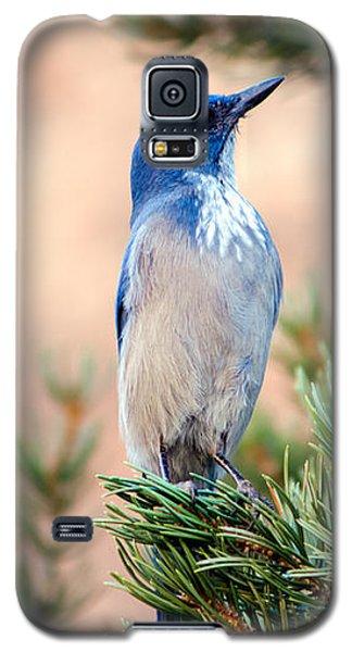 Western Scrub Jay Galaxy S5 Case