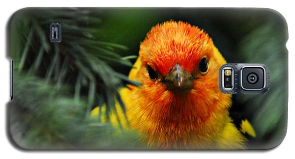 Western Tanager Galaxy S5 Case