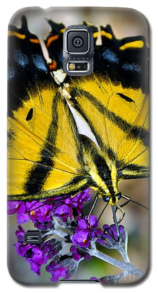 Galaxy S5 Case featuring the photograph Western Tiger Swallowtail  by Gina Savage