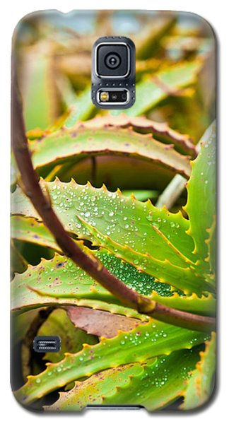 After The Rain Galaxy S5 Case by Melinda Ledsome