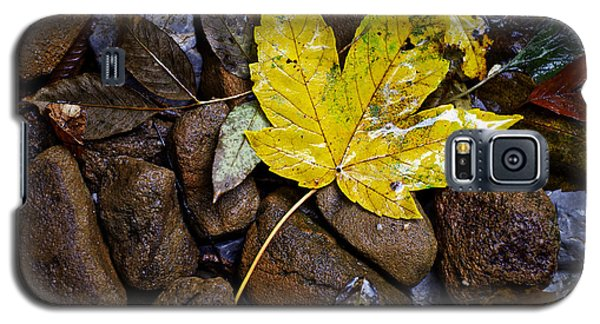 Wet Autumn Leaf On Stones Galaxy S5 Case