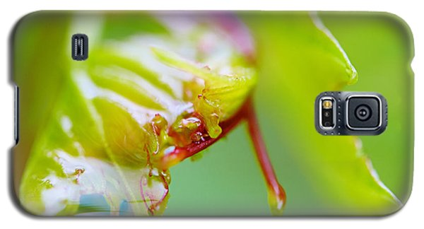 Galaxy S5 Case featuring the photograph Wet Grape Leaf  by Nick  Biemans