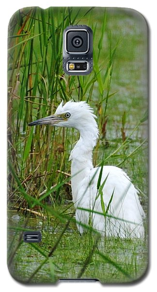 Wet Juvenile Little Blue Heron Galaxy S5 Case