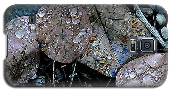 Wet Leaves Galaxy S5 Case by Artist and Photographer Laura Wrede