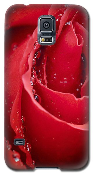 Wet Rose In Mexico Galaxy S5 Case