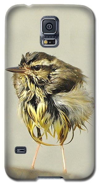 Wet Warbler Galaxy S5 Case
