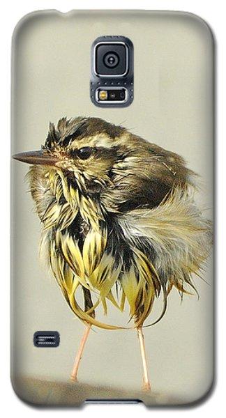 Wet Warbler Galaxy S5 Case by Bradford Martin