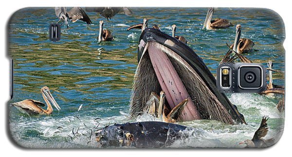 Whale Almost Eating A Pelican Galaxy S5 Case