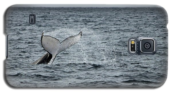 Whale Of A Time Galaxy S5 Case by Miroslava Jurcik