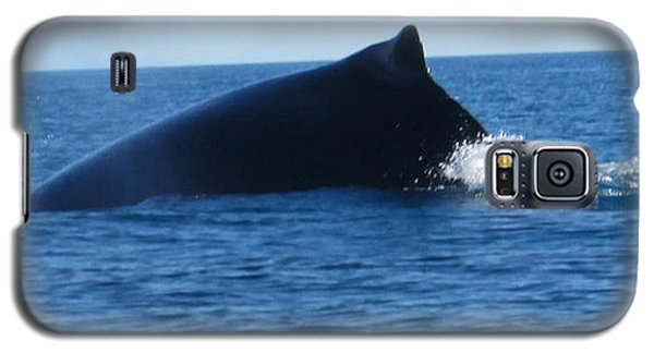 Galaxy S5 Case featuring the photograph Whale by Tony Mathews