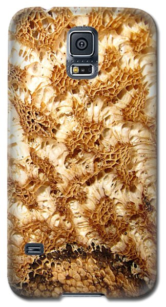 Galaxy S5 Case featuring the photograph What A Fungus by Mary Bedy