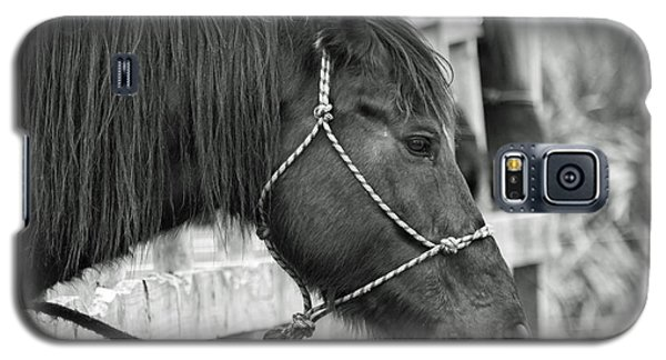 What A Horse Galaxy S5 Case