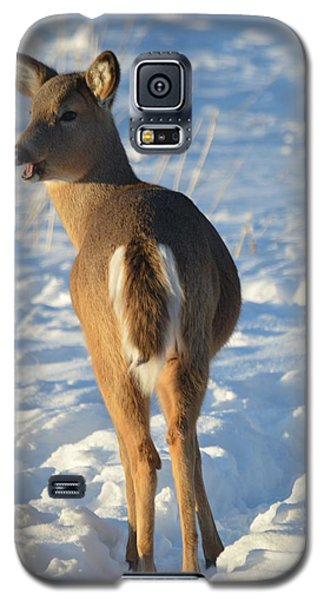 What Do You Think This Deer Is Saying? Galaxy S5 Case by Dacia Doroff