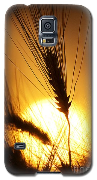 Wheat At Sunset Silhouette Galaxy S5 Case