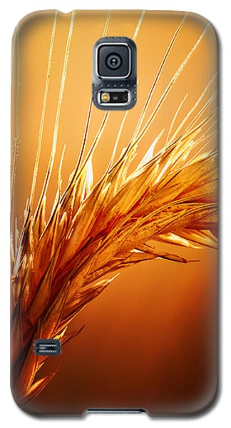Wheat Close-up Galaxy S5 Case by Johan Swanepoel