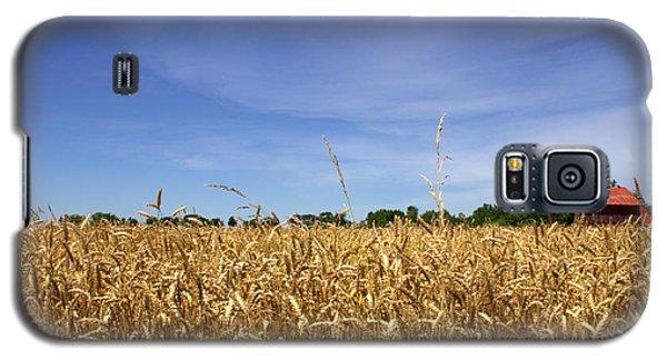 Wheat Field II Galaxy S5 Case by Beth Vincent