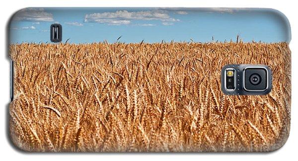 Wheat Field In Blue Sky Galaxy S5 Case