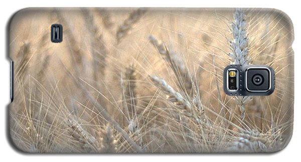 Beautiful Galaxy S5 Case - #wheat #france #rsa_ladies #rsa_nature by Georgia Fowler