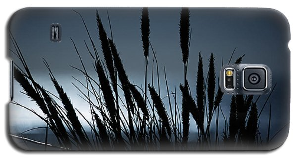 Galaxy S5 Case featuring the photograph Wheat Stalks On A Dune At Moonlight by Nick  Biemans
