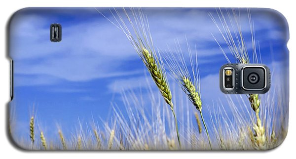 Galaxy S5 Case featuring the photograph Wheat Trio by Keith Armstrong