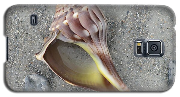 Whelk With Sand Galaxy S5 Case