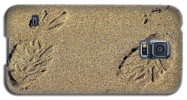 Galaxy S5 Case featuring the photograph Which Way Did I Go? by Bob Wall