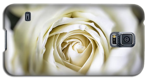 Rose Galaxy S5 Case - Whie Rose Softly by Garry Gay