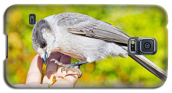 Whiskey Jack Or Gray Jay Eating Nuts From A Hand Galaxy S5 Case