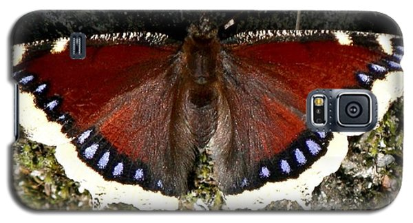 Galaxy S5 Case featuring the photograph Whistler Butterfly by Amanda Holmes Tzafrir