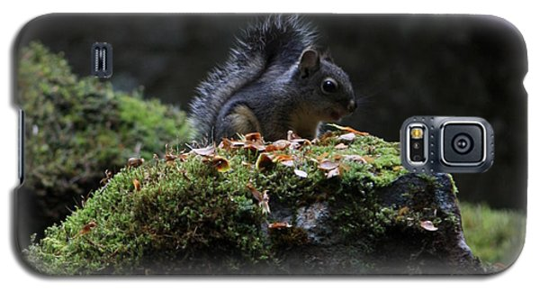Whistler Squirrel Galaxy S5 Case