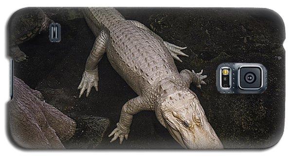White Alligator Galaxy S5 Case