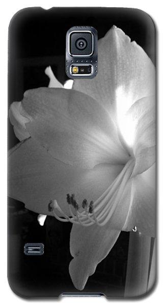 White Amaryllis  Galaxy S5 Case